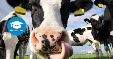 koeien-720x450