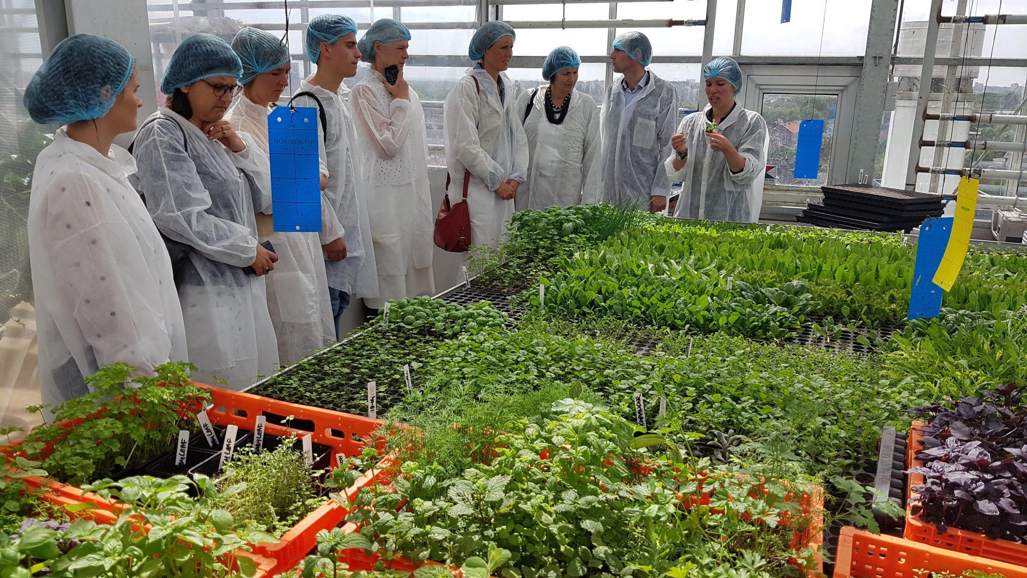Vensterlandbouw: 80% lokaal eten in 2036